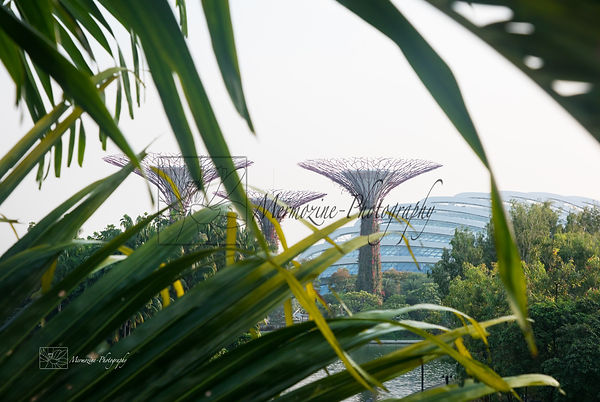 Super trees in Gardens by the Bay, Singapore.