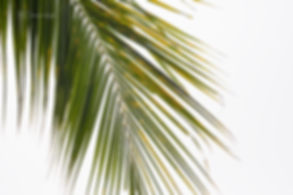 Palm tree branch, Singapore.