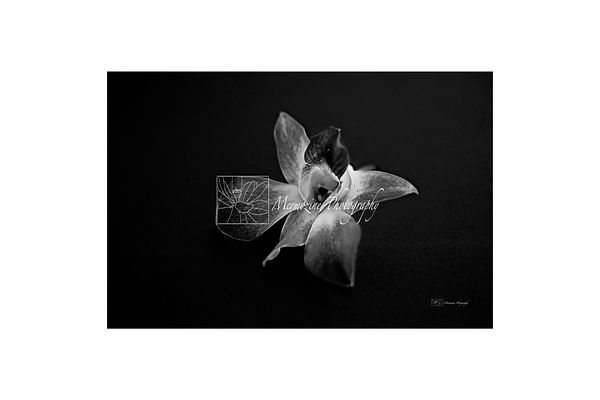 Black and white photography of nature: orchids.