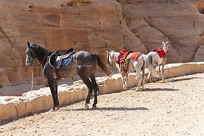 Photograph of horses in the entrance of he ancient site of Petra in Jordan.