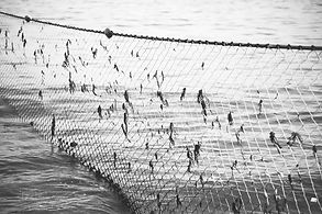 Fishing nets in Manly beach, Australia.