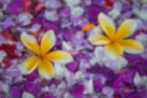 Mix of flowers in Ubud, Bali, Indonesia.