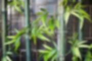Tiong Bahru-0463.jpg