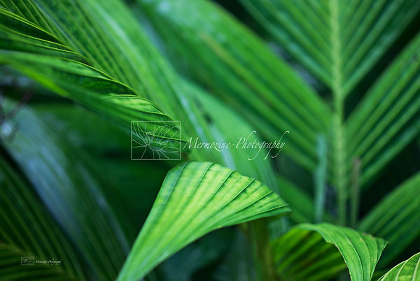 leaves in the Botanic Gardens, Singapore.