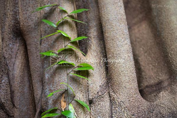 Photograph from the Botanic Gardens, Singapore.