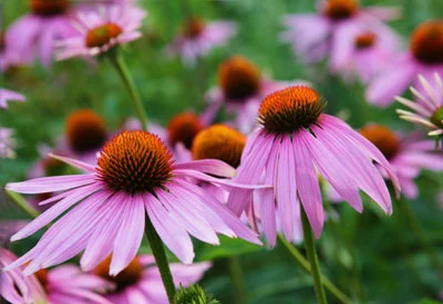 Why Should You Care About Native Plants?