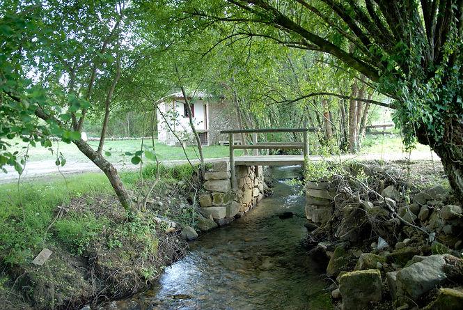 Brook nature.JPG