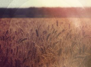 Field of Wheat Worship Background.jpg