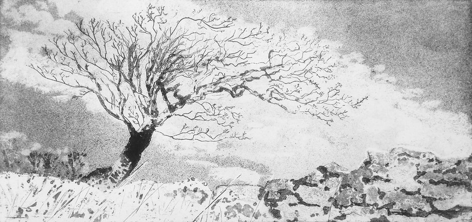 Windswept, etching, 12x25cms.jpg