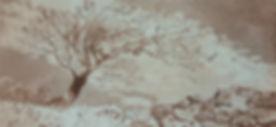 windswept sepia.jpg
