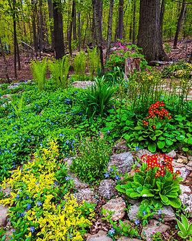 A colorful backyard woodland garden..jpg