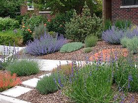 Xeriscape garden landscape.jpg