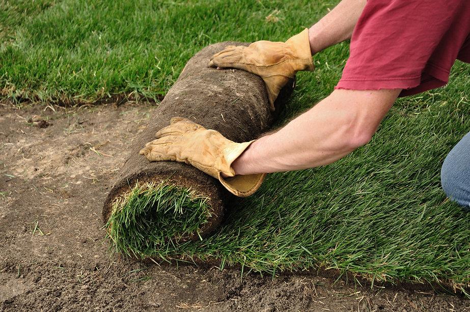 Unrolling Sod for a New Lawn.jpg