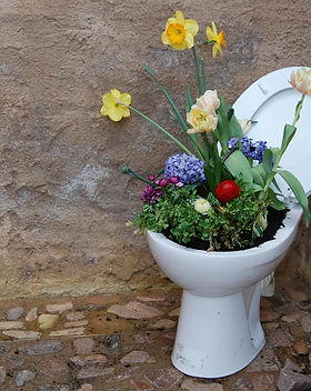 WC toilet with flowers growing inside in