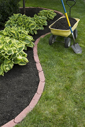 Mulching bed around hostas and wheelbarr