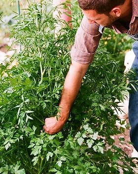 Gardener_edited.jpg
