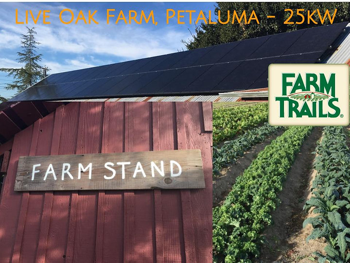 Live Oak Farm