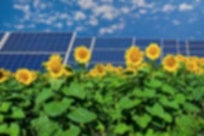 solar-panels-and-sunflowers.jpg
