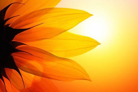 sunflower and sun.jpg