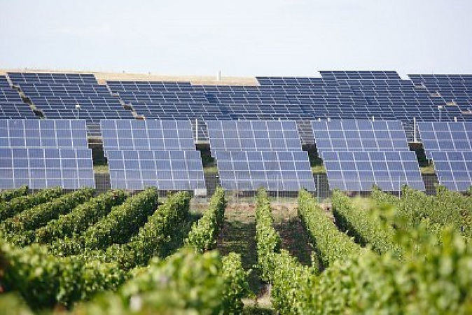 solar-panels-and-vineyard-in-foreground.jpg