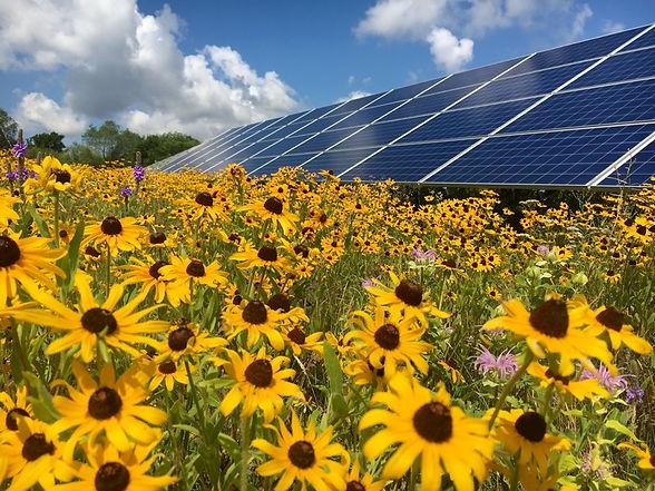 sunflower-solar.jpg