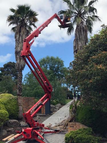 cmc s19e machine palm tree.jpg