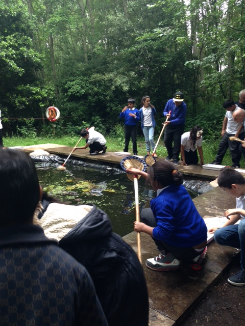 Year 5 pond dipping
