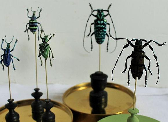 insecten onder een stolp