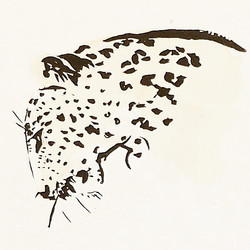 Leopard - Victoria FitzRoy