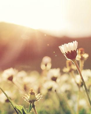 お花と光.jpg