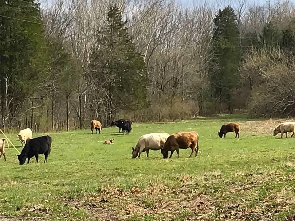 35 Pasture