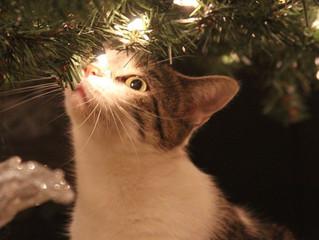 Stressfreie Feiertage mit Katze