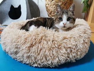 Geschenkideen für Katzen und Katzenfreunde