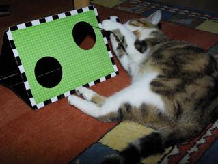 Tooor - Katze im WM-Fieber