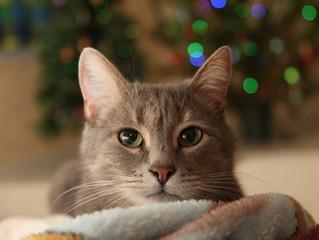 Stressfreies Silvester mit Katze