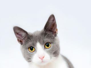 Tierpsychologie - um was gehts dabei?