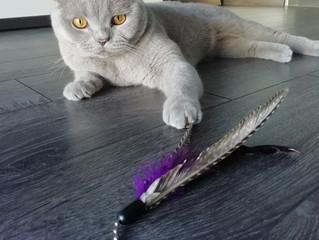 """""""Meine Katze spielt nicht"""" - ein häufiger Irrtum"""