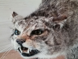 Wildkatzen im Saarland