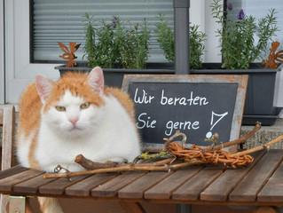 Mobile Katzenbetreuung?!