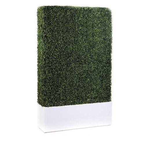 8' Boxwood Hedge