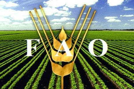 FAO și MADRM au discutat răspunsul comun la provocările COVID-19 în agricultură și alimentație4 mai