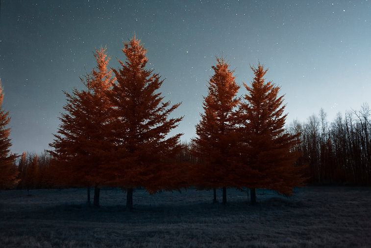 Trees underneath stars with the moon lighting up the tops of them. This photo was taken in Fairbanks, Alaska