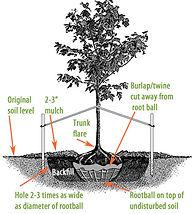 8741-tree-diagram.jpg
