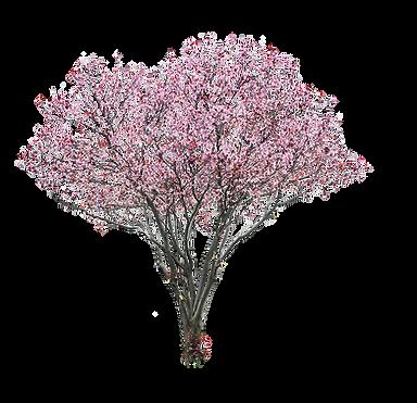 Magnolia2.png