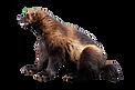 wolverine-animal-png-5-png-image-wolveri