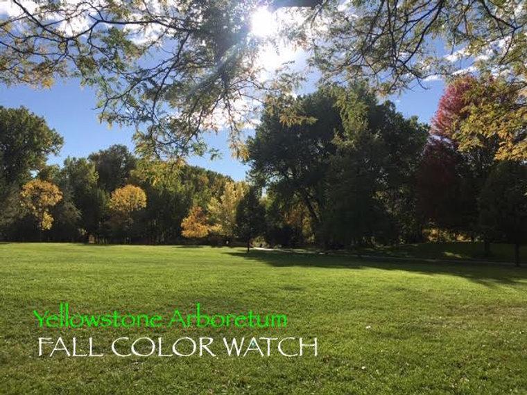 fallcolorwatch.jpg