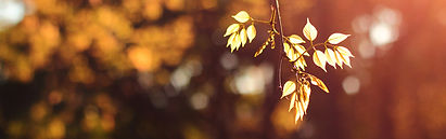 treebranch2.jpg