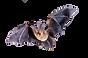 4-2-bat-png-clipart.png