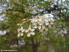 white-flower_40.jpg