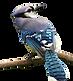 bird photo png transparent.png